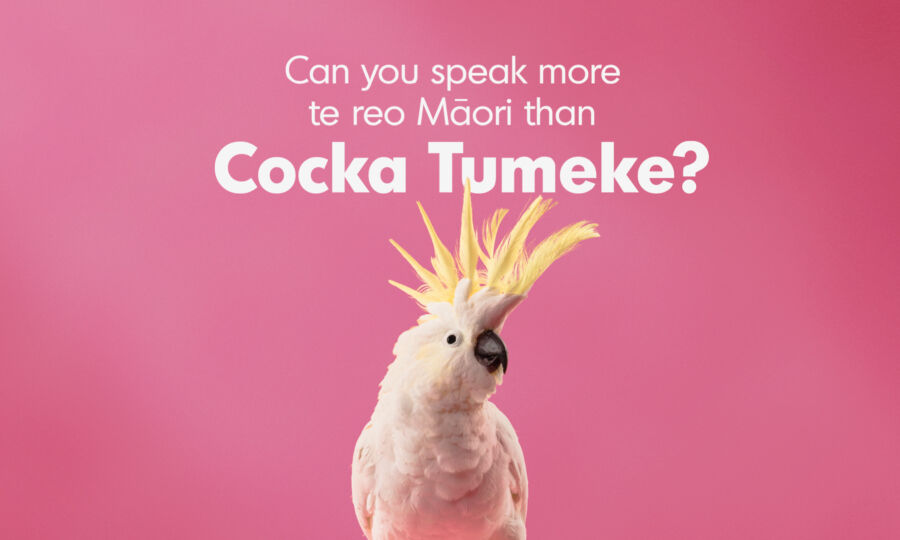 MLW CockaTumeke Launch