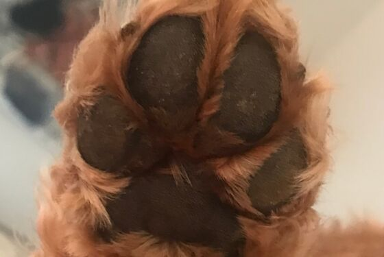 Pet Paw Print After