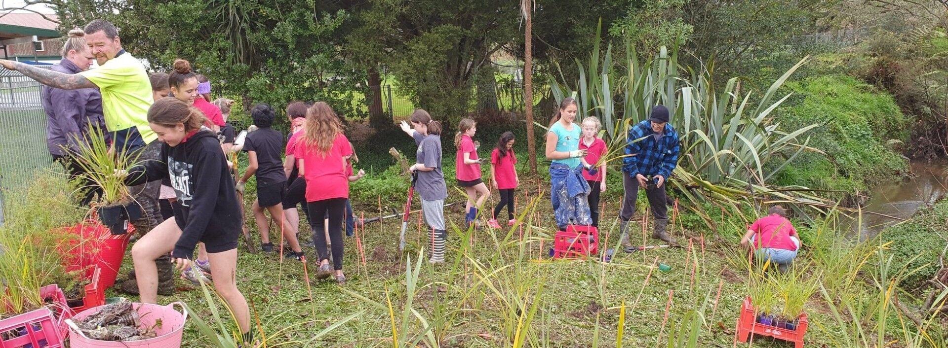 Hikurangi School Trees for Surival 19