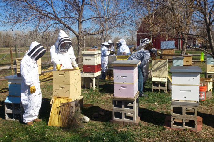 Bee Keeping Residents e1581476943535